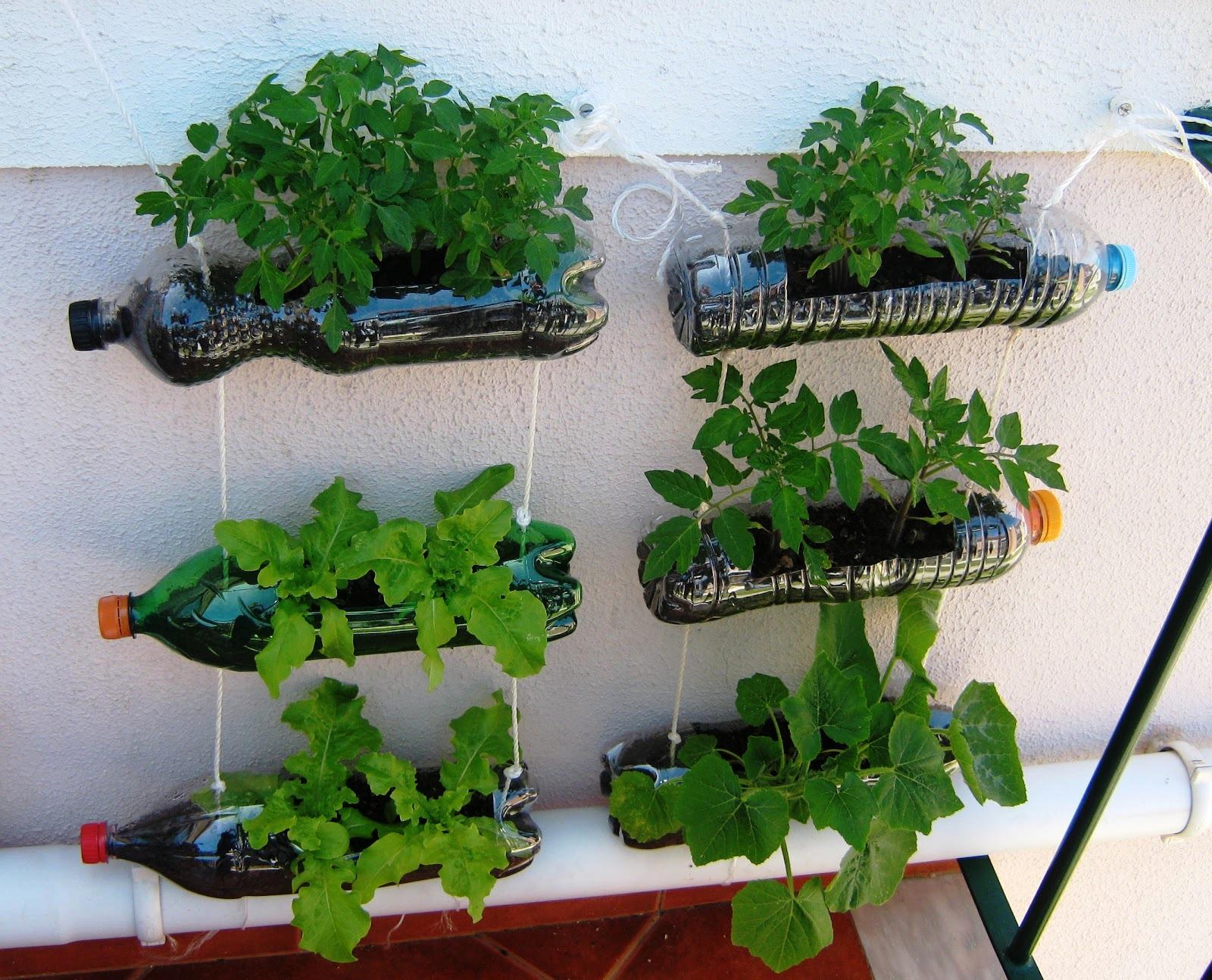 Giardino Sul Balcone Di Casa : Concetto di casa e il giardino della pianta di edera in vaso sul